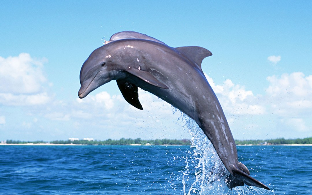 Dolphins Evolve Opposable Thumbs; Mankind's Days Numbered